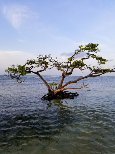 Lake Water Tranquility Beach Landscape Nature Animal Wildlife Beauty In Nature Tree Outdoors No People Sky Horizon Over Water Bird Day Ponce