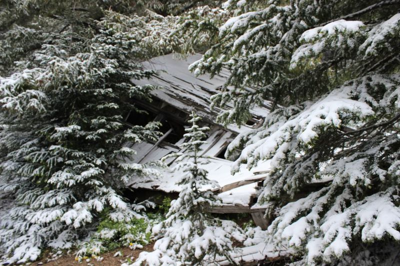 Dilapidated Fallen Buildings Abandoned Buildings Abandoned Snow Cold Temperature Winter Tree Covering Nature High Angle View Scenics - Nature Architecture Coniferous Tree
