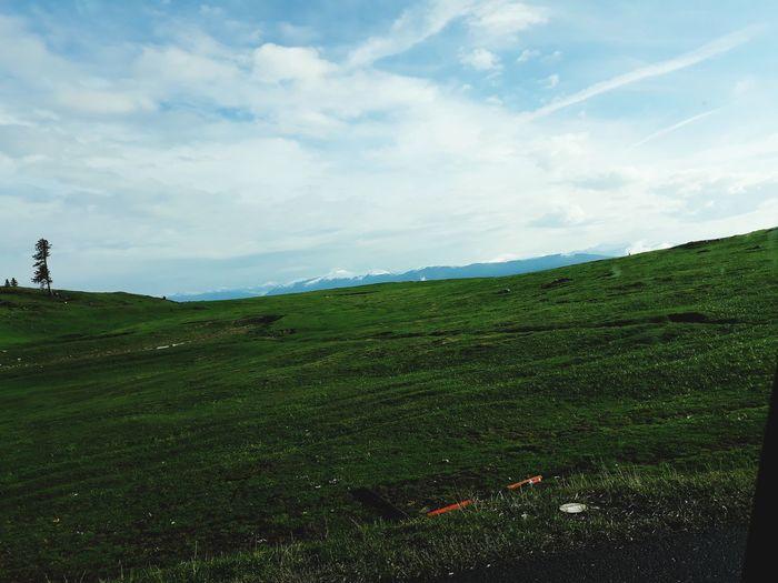 dobratsch Tea Crop Rural Scene Agriculture Field Tree Sky Landscape Grass Green Color Cloud - Sky