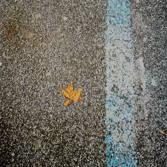 Textured  Full Frame No People Asphalt Close-up Leaf Autumn Autumn Colors Blue Line Street in autumn