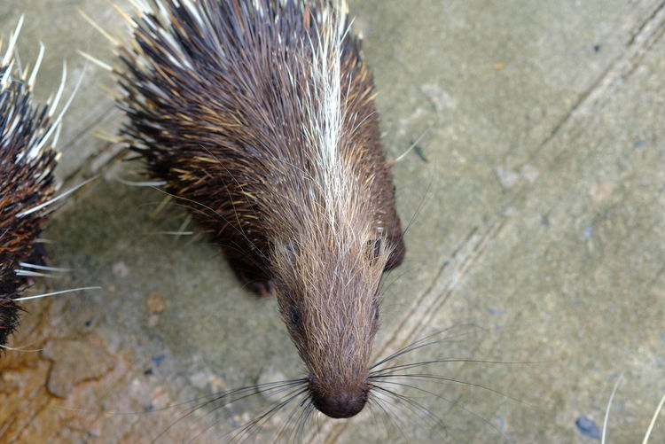 Close-up of an animal