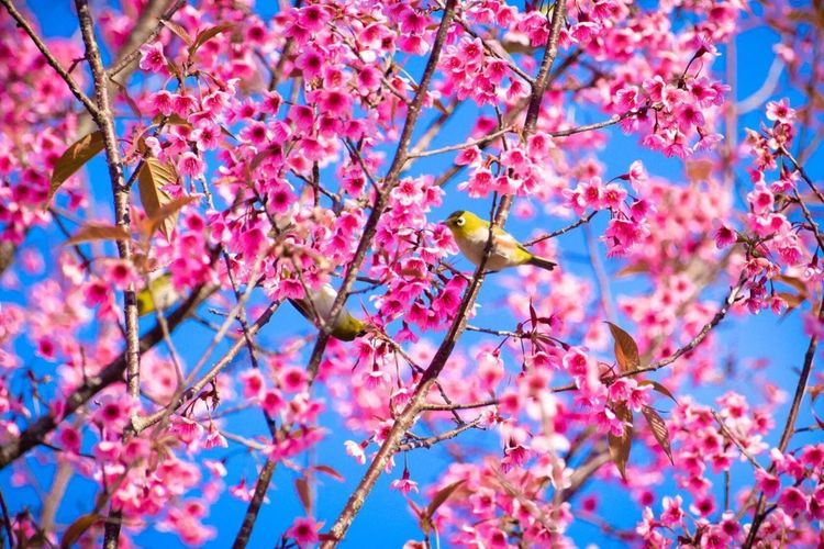 Beauty In Nature Blossom Flower Pink Color Anymal