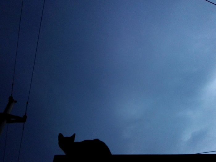 One Animal Silhouette Cat Silhouette Cat Uppon Blue Sky Cat Silhouette Uppon Blue Sky Animal Themes No People Outdoors Nature Animal Cat Low Angle View Sky Huaweiphotography WOLFZUACHiV Photos On Market Veronica Ionita Huawei Photography Wolfzuachiv Eyeem Market Ionita Veronica WOLFZUACHiV Photography