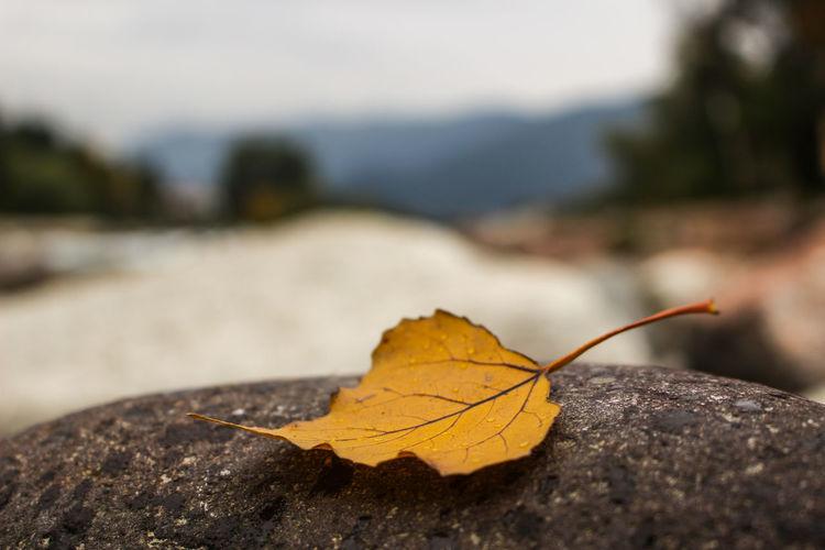 Close-up leaf