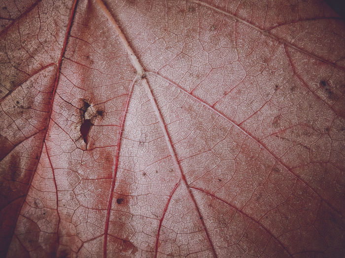 High angle view of insect on leaf