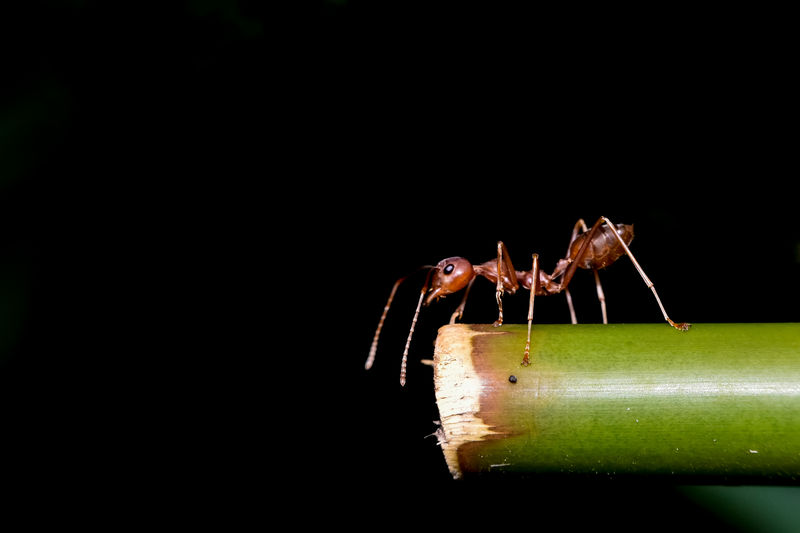 Close-up of insect over black background