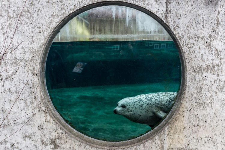 Seal swimming in pond seen through window at zoo