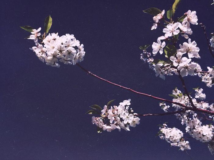 White flowers blooming on tree