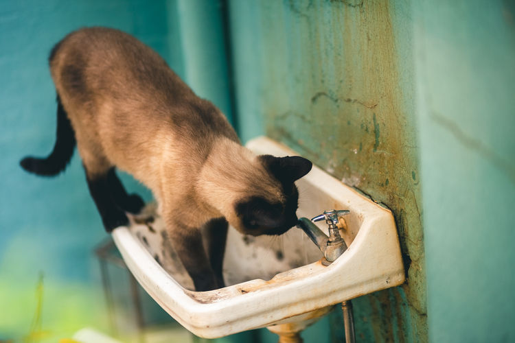 Close-up of a dog drinking water
