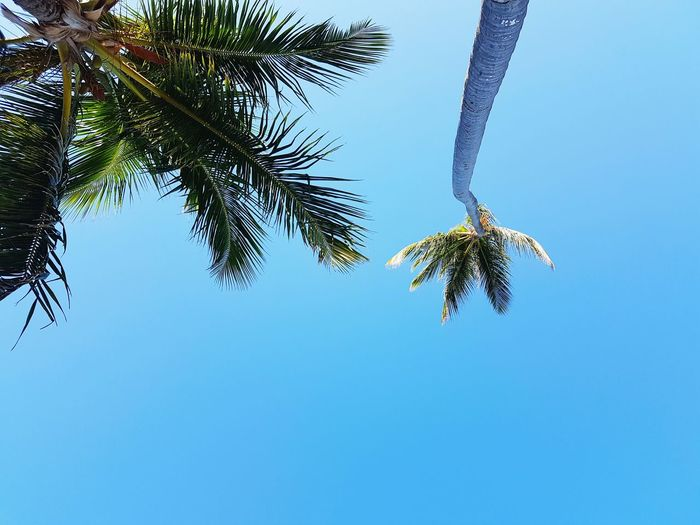 Tree Low Angle View Spider Web Nature Branch Palm Tree No People Clear Sky Animal Themes Sky Survival Beauty In Nature Day Close-up Outdoors Spider Insect Fragility
