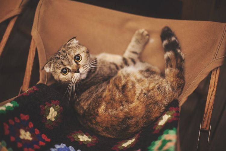 Realfakedoll Cat Domestic Cat Pets Domestic Animals Feline Animal Themes Mammal Indoors