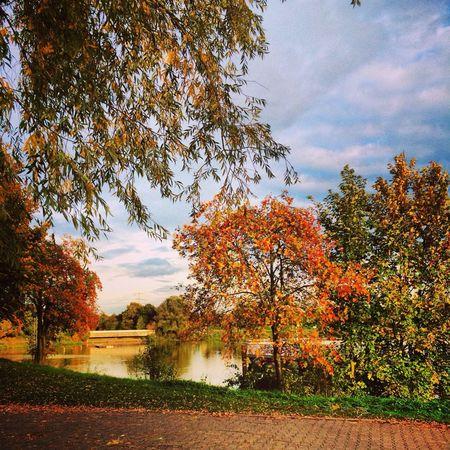 Autumn Autumn Colors Kemmnadersee Witten