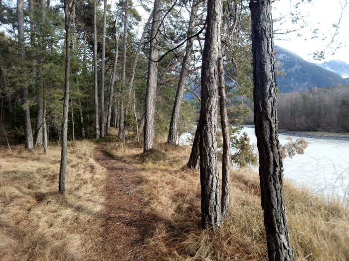 path in the riverside in tyrol Tyrol Forest Photography Ache Austrian Alps Mountains Alps Austria Alps Austria Tyrol-Austria River Riverside Winter Trees Walkway Tree Forest Tree Trunk Branch Sky Landscape