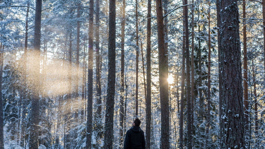 Rear view of mid adult man standing in forest during winter