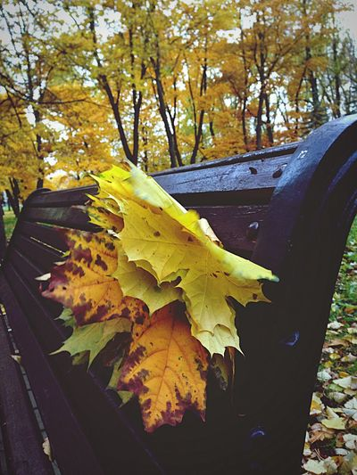 Park No People Bouquet Leaves Leaf Autumn Autumn Leaves Autumn Colors Colors Orange Yellow Red Colorful