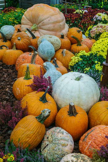 Various type of pumpkin Abundance Autumn Choice Close-up Day Food Food And Drink Freshness Gourd Halloween Healthy Eating Market No People Outdoors Pumpkin Squash - Vegetable Variation Vegetable