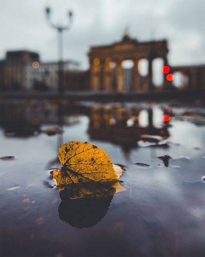 Autumn Brandenburger Tor Autumn Change Leaf No People Water Nature Outdoors Fragility Day Close-up Architecture Beauty In Nature Sky The Week Of Eyeem EyeEm Best Shots