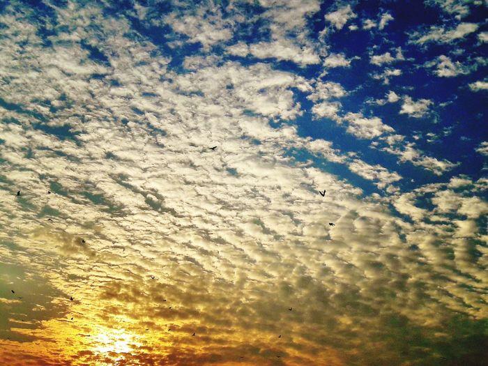 Bird Photography Birds Sunset_collection Sunset Eyeem Pakistan Pakistanphotochallenge SamsungJ7 Mobilephotography Nawanlahore Beautiful Beauty Of Nature InPakistan In Pakistan