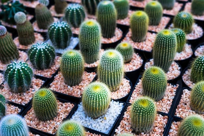 Full frame shot of succulent plant full color cactus