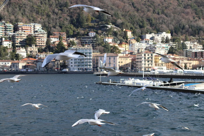 Lake Of Como, Italy Blu Sky Day Gulls In Flight Nature No People Outdoors Water Windy Day EyeEmNewHere
