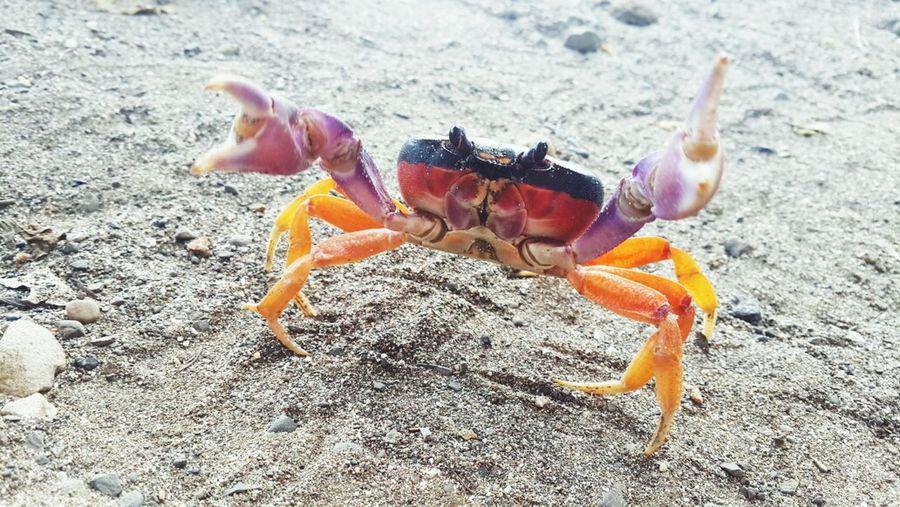 Crab Relaxing