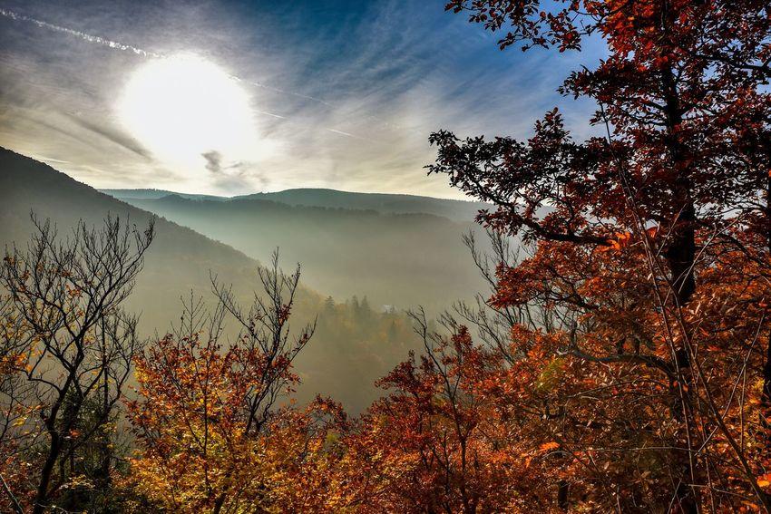 Harz Gernany Nature Lanscape Landschaften Eyemnaturelover Deutschland Herbst Nature_collection Wolken Cloudporn Autumn Autumn Collection Forest Fog Nebel Hello World Eye4photography