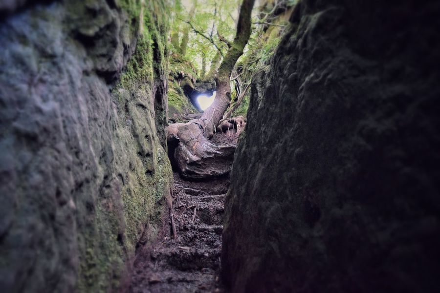 Procarious steps not one of the easier terrains of mud and wet rock Tree Trunk Forest Tree Selective Focus Textured  Moss Rough Nature Bark Tranquility Non-urban Scene Tranquil Scene Solitude Day Surface Level Remote Rugged Scenics No People The Way Forward Scotland Devil's Pulpit