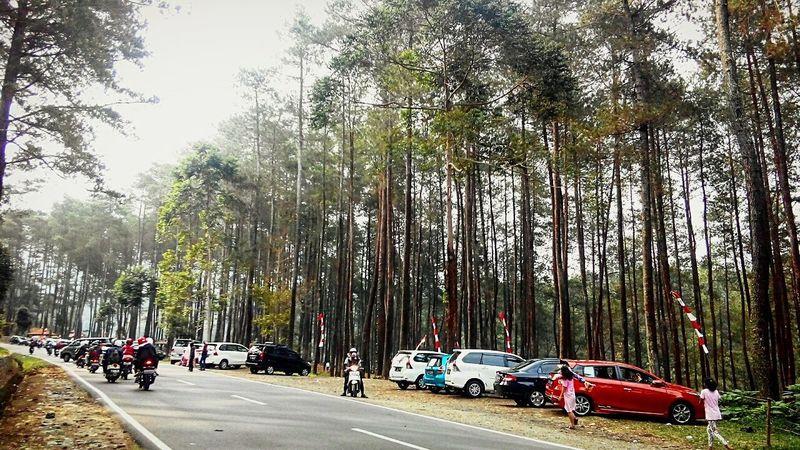 The Street Photographer - 2017 EyeEm Awards Bandungexplore Bandunglautanphotographer LembangBandung Car Tree Transportation Road Land Vehicle Mode Of Transport Day Outdoors Sky Nature People
