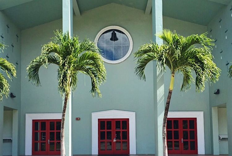 Palm trees in front of building