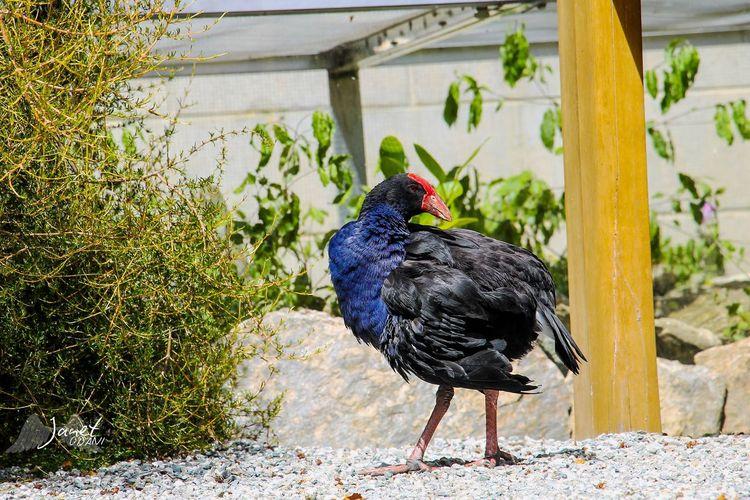 Black bird perching on rock