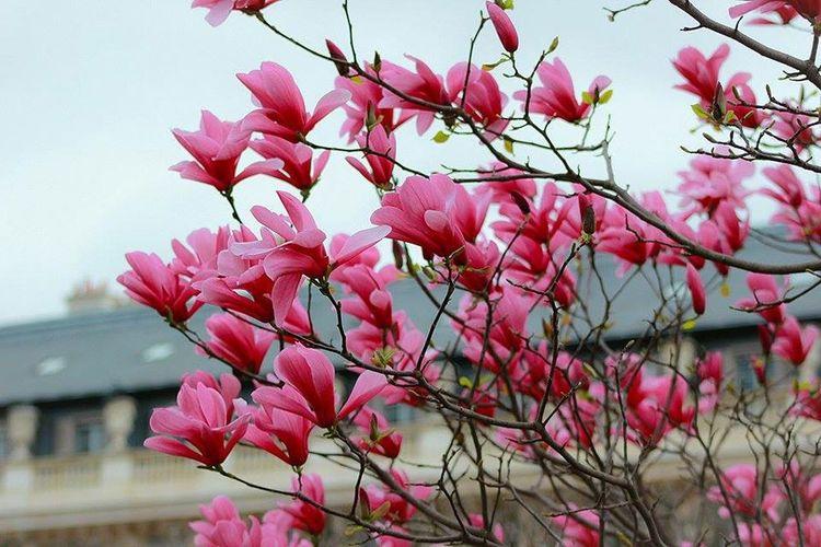 Flowers Nature Nature_collection Garden Paris Taking Photos Enjoying Life Sunday