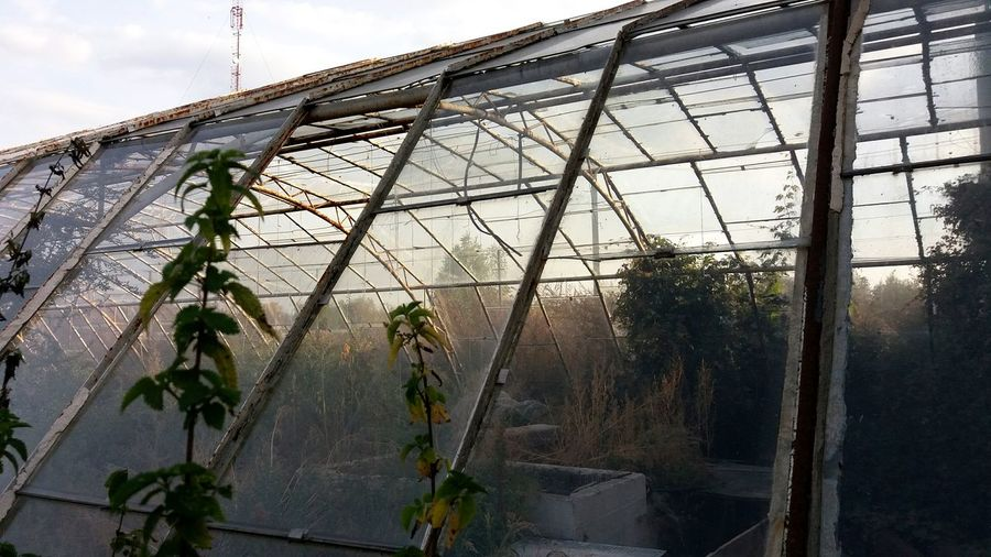 Low Angle View Built Structure Architecture Sky Growth Day Development Outdoors Cloud - Sky No People Green Color Weathered Growing Greenhouse Hothouse Through The Glass