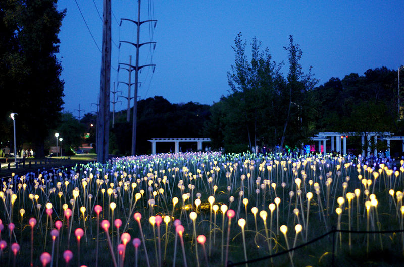 Field of light Plant Sky Nature Tree Flower Flowering Plant Growth No People Blue Outdoors Land Field Technology Night Dusk Clear Sky Beauty In Nature Electricity  Cable Power Line  Power Supply Field Of Lights
