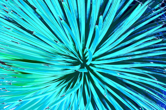 Abstract Backgrounds Beauty In Nature Blue Botany Check This Out Close Up Close-up Day Edited Edited My Way Fragility Full Frame Growth Nature Nikon Nikon D5200 Nikonphotography No People Outdoors Pattern Plant Textured