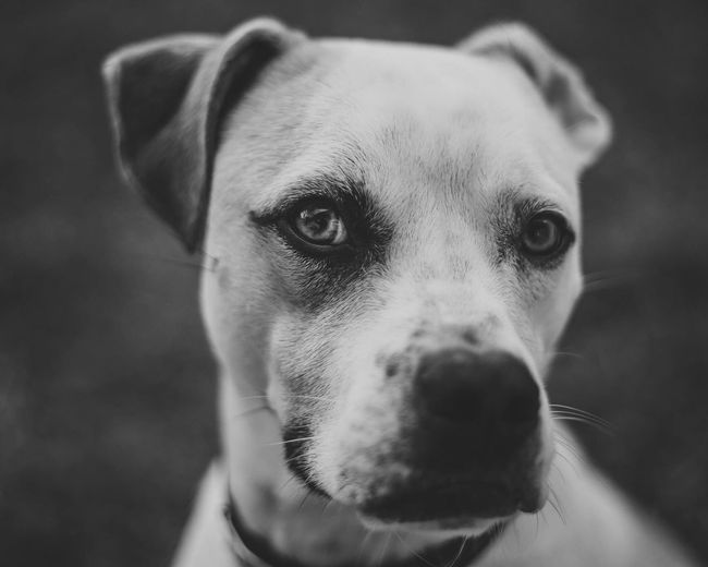 Handsome Blackandwhite Eyes Dog Cute Focus On Foreground Outdoors Puppy Portrait