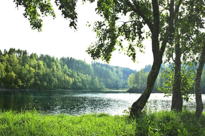 Tree Plant Lake