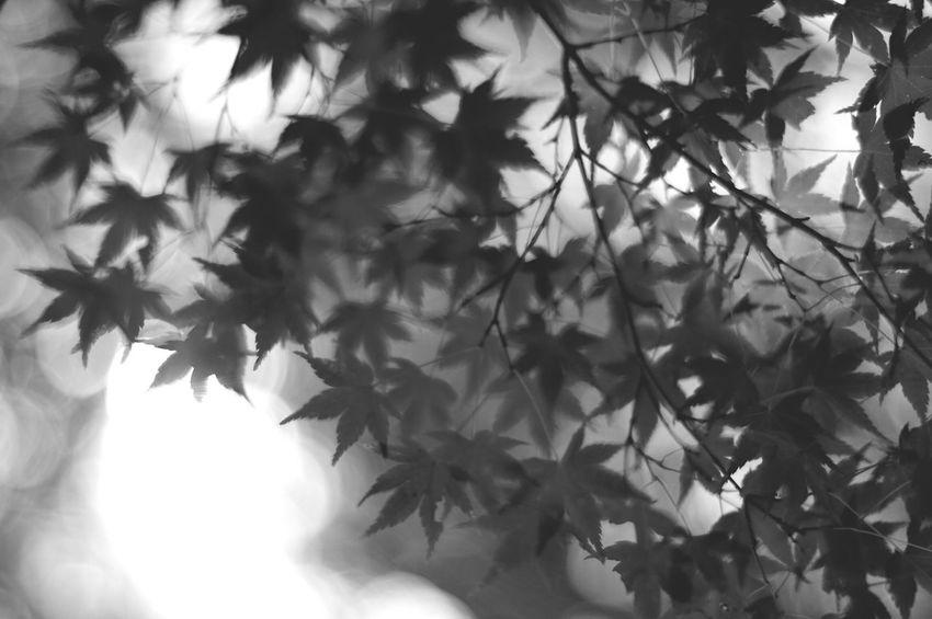 Danzanjinjya Planar50/1.4 Pentaxk7 Blackandwhite Bw_lovers Black & White EyeEm Gallery Monochrome Carl Zeiss Planar Pentax Focus On Shadow Bw_collection
