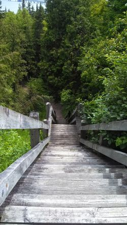 The Way Forward Tree Day Growth Outdoors Nature No People Footbridge Plant Beauty In Nature