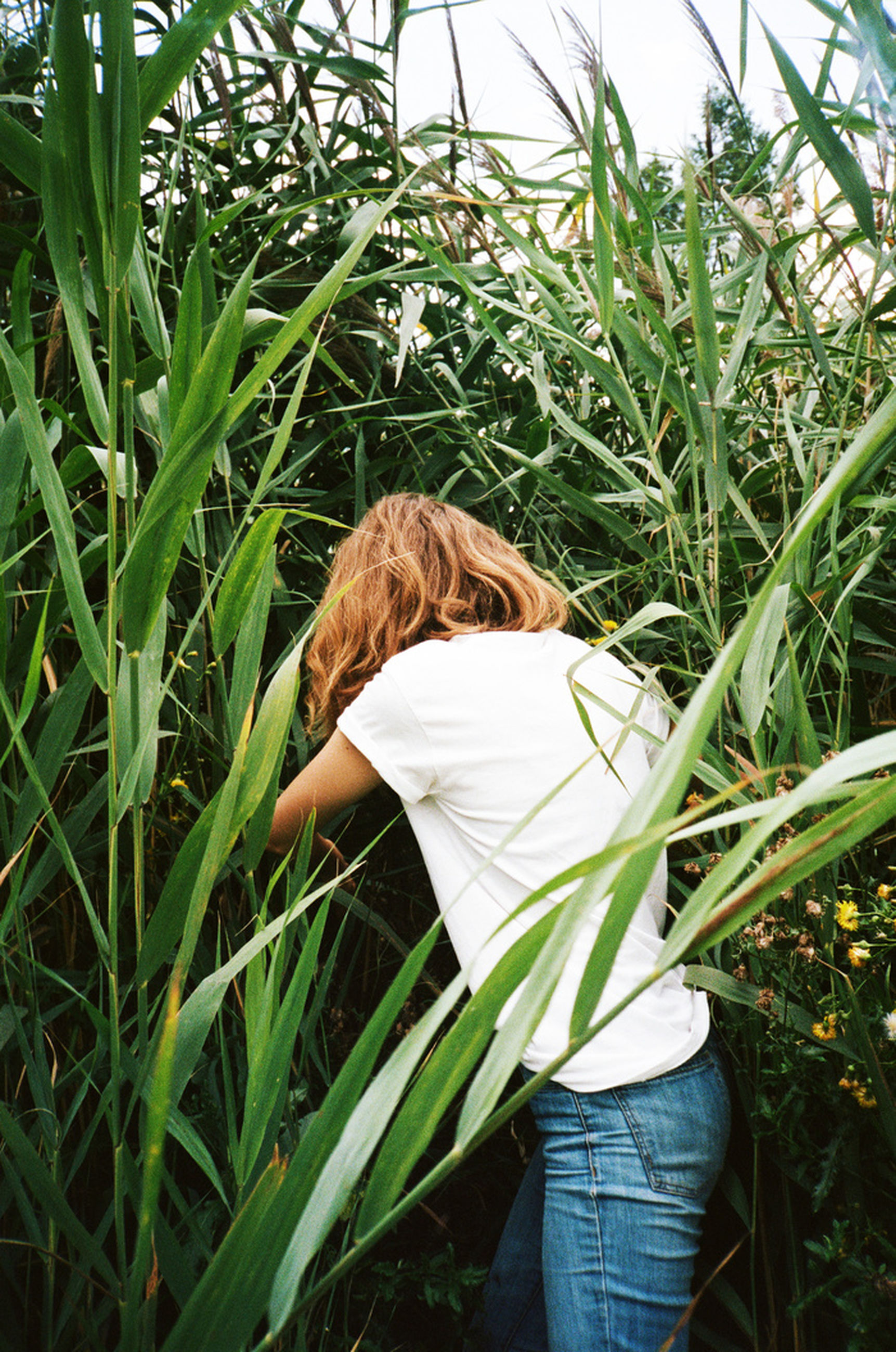 one person, growth, plant, real people, leisure activity, field, land, women, three quarter length, nature, lifestyles, standing, rear view, day, adult, green color, hair, young adult, casual clothing, hairstyle, outdoors, obscured face