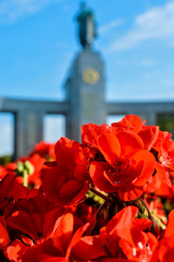 Red flowers in foreground with bokeh russion soldier statue in the background Architecture Beauty In Nature Blooming Close-up Day Flower Flower Head Fragility Freshness Nature No People Outdoors Petal Plant Poppy Red Sky