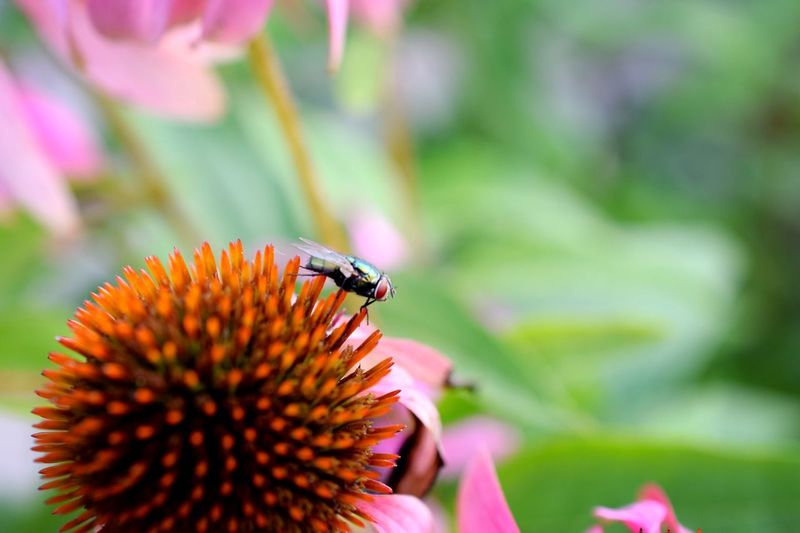 Colorful EyeEm Selects Flower Animal Themes Flowering Plant Insect Animals In The Wild One Animal Invertebrate Fragility Animal Wildlife Beauty In Nature Close-up Plant
