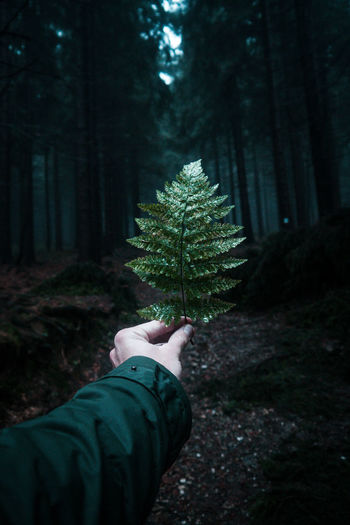 Czech Republic Beauty In Nature Close-up Day Focus On Foreground Forest Green Color Growth Human Body Part Human Hand Human Leg Leaf Low Section Men Nature One Person Outdoors People Plant Real People Tree