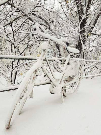 Fahrrad Fahrräder Fahrradabstellplatz Snow Winter Close-up Snow Covered Deep Snow Cold Powder Snow White EyeEmNewHere