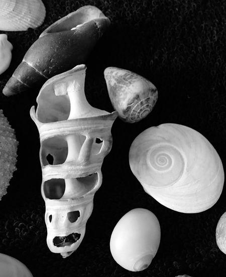 Shells No