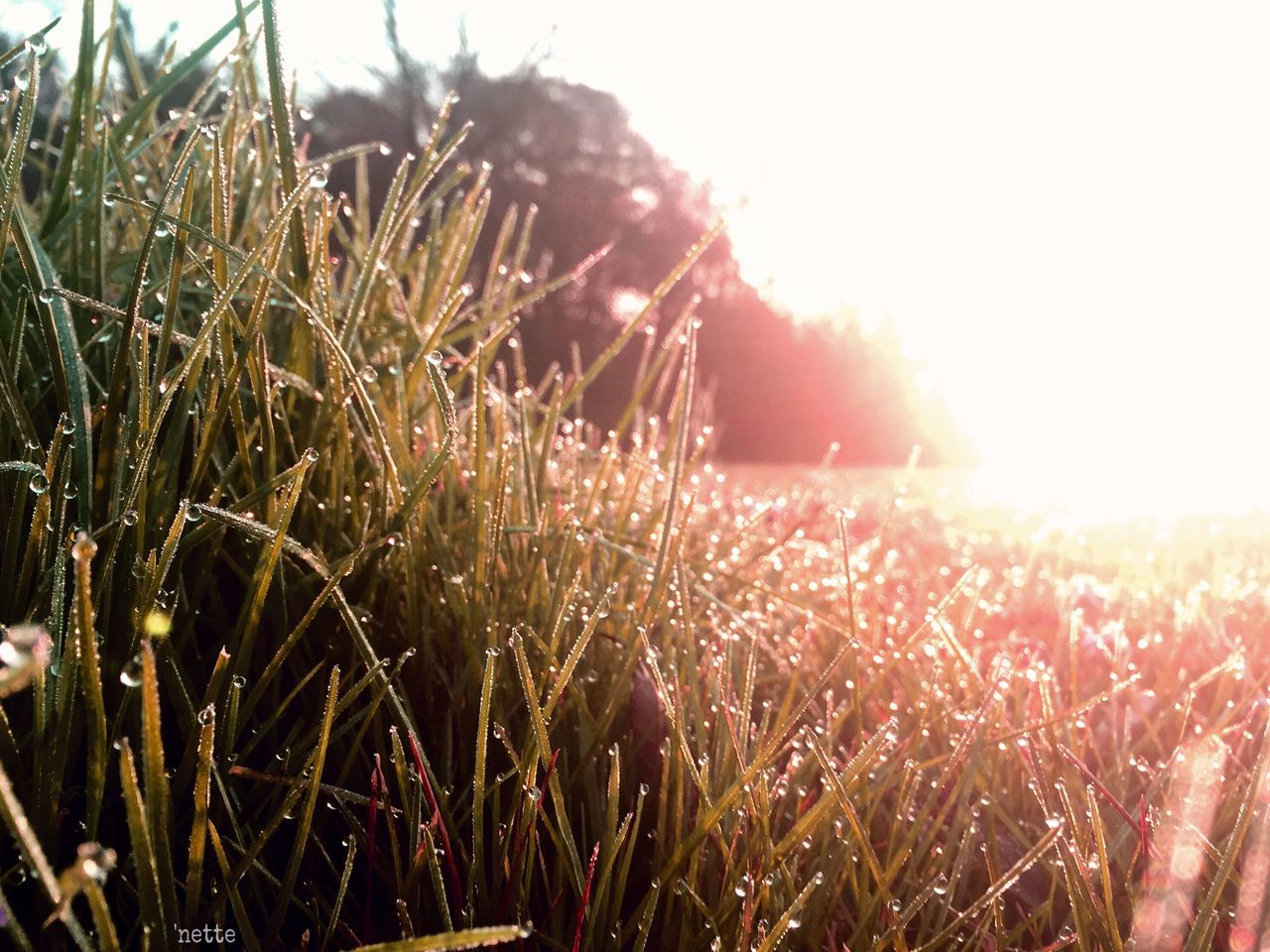 growth, field, nature, sunlight, plant, no people, outdoors, tranquility, grass, beauty in nature, day, sky, close-up, freshness
