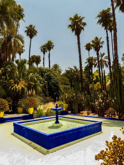Jardin Majorelle - Marrakesh Fountain Marrakesh Morocco Nature Palm Tree Sunny Travel Africa Beauty In Nature Bleu Majorelle Fountain Garden Jardin Jardin Majorelle Maroc Marrakech Nature No People Outdoors Park - Man Made Space Pool Travel Destinations Travelphotography Tree Water