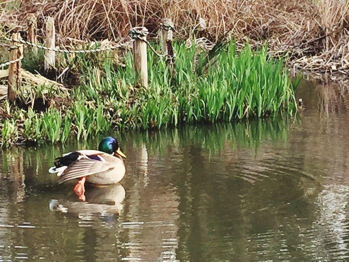 西国分寺駅近くの姿見の池