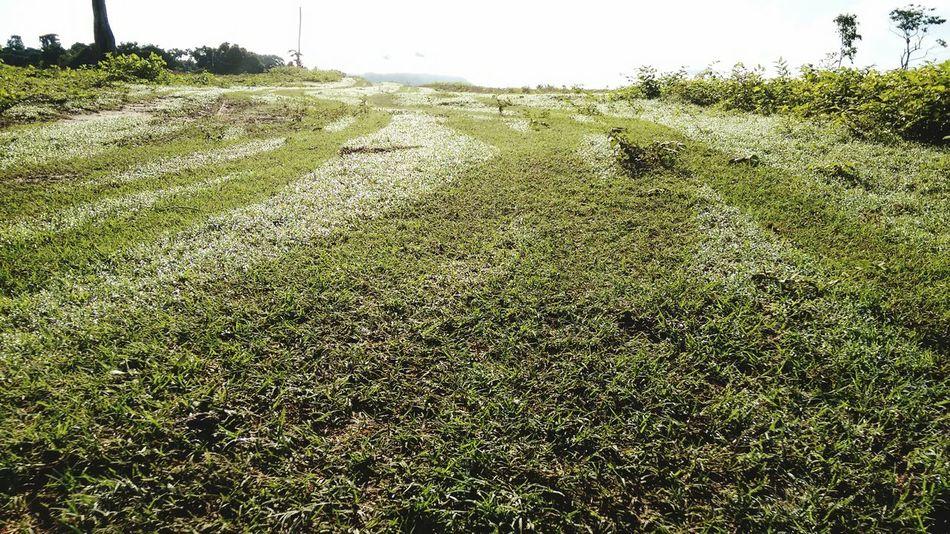 Foto da vegetação úmida ao nascer do sol Grass Relva Grama Molhada