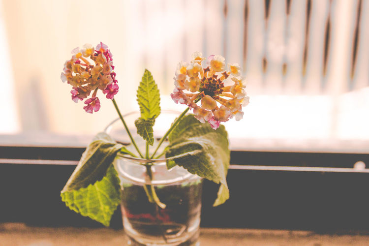 000 Beauty In Nature Close-up Day Flower Flower Head Focus On Foreground Fragility Freshness Growth Indoors  Leaf Nature No People Petal Plant Table Vase
