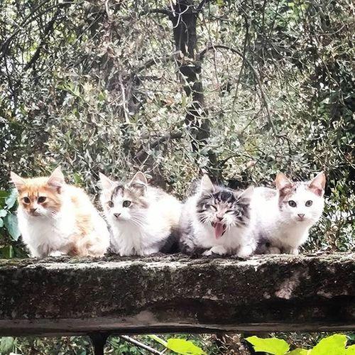 Kuzularim :) Kittensrock Cuteness Weekendfun